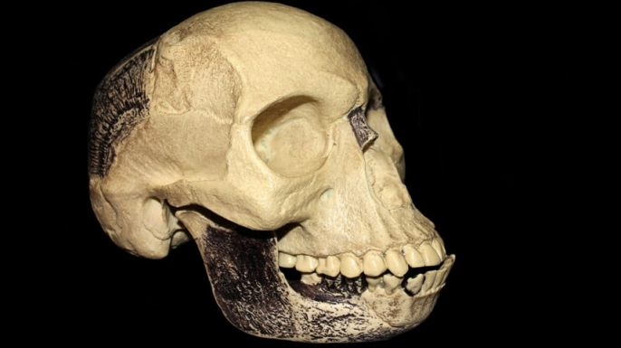 The Piltdown Man's fraud
