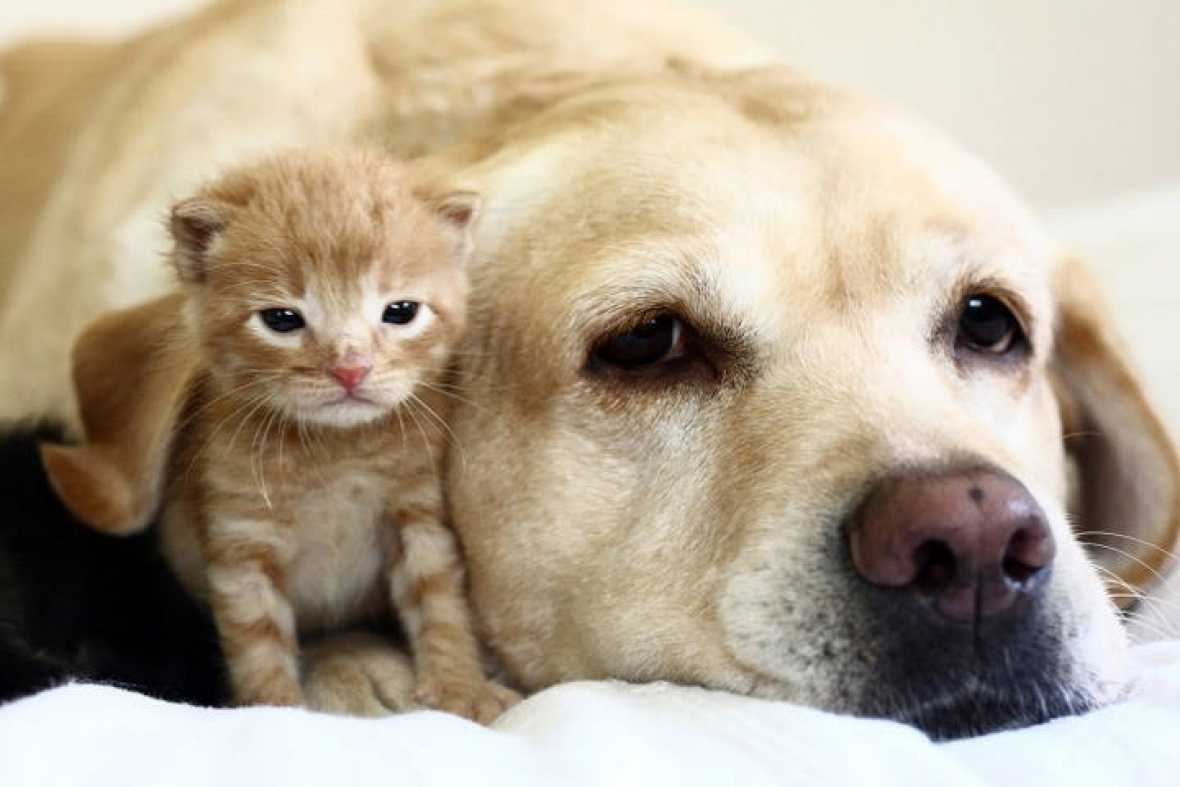 A dog and kitty