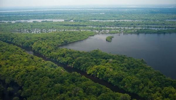 Arquipélago de Anavilhanas, Amazonas